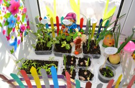Чудо-огород на окне